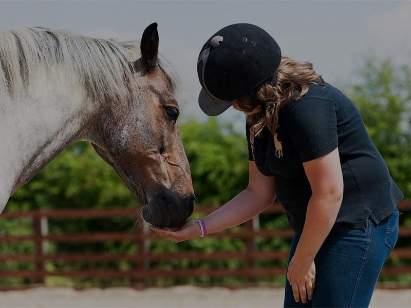 NEW! – How horses can help support those with high levels of anxiety. FREE ONLINE WORKSHOP -21 July 2020