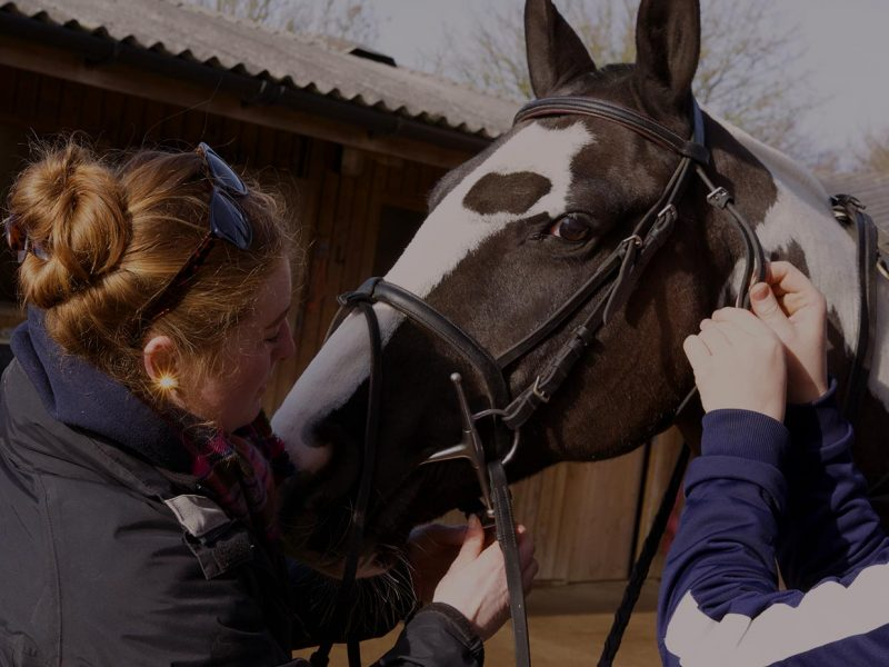 Join our team! Calling all aspiring Equine Coaches / Therapists