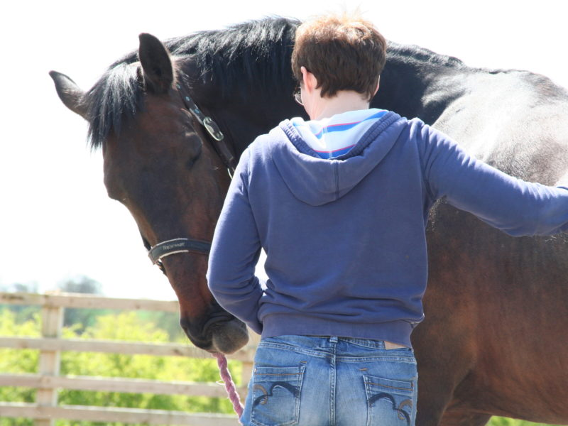New Courses! Equine Practitioners Course and Taster Day