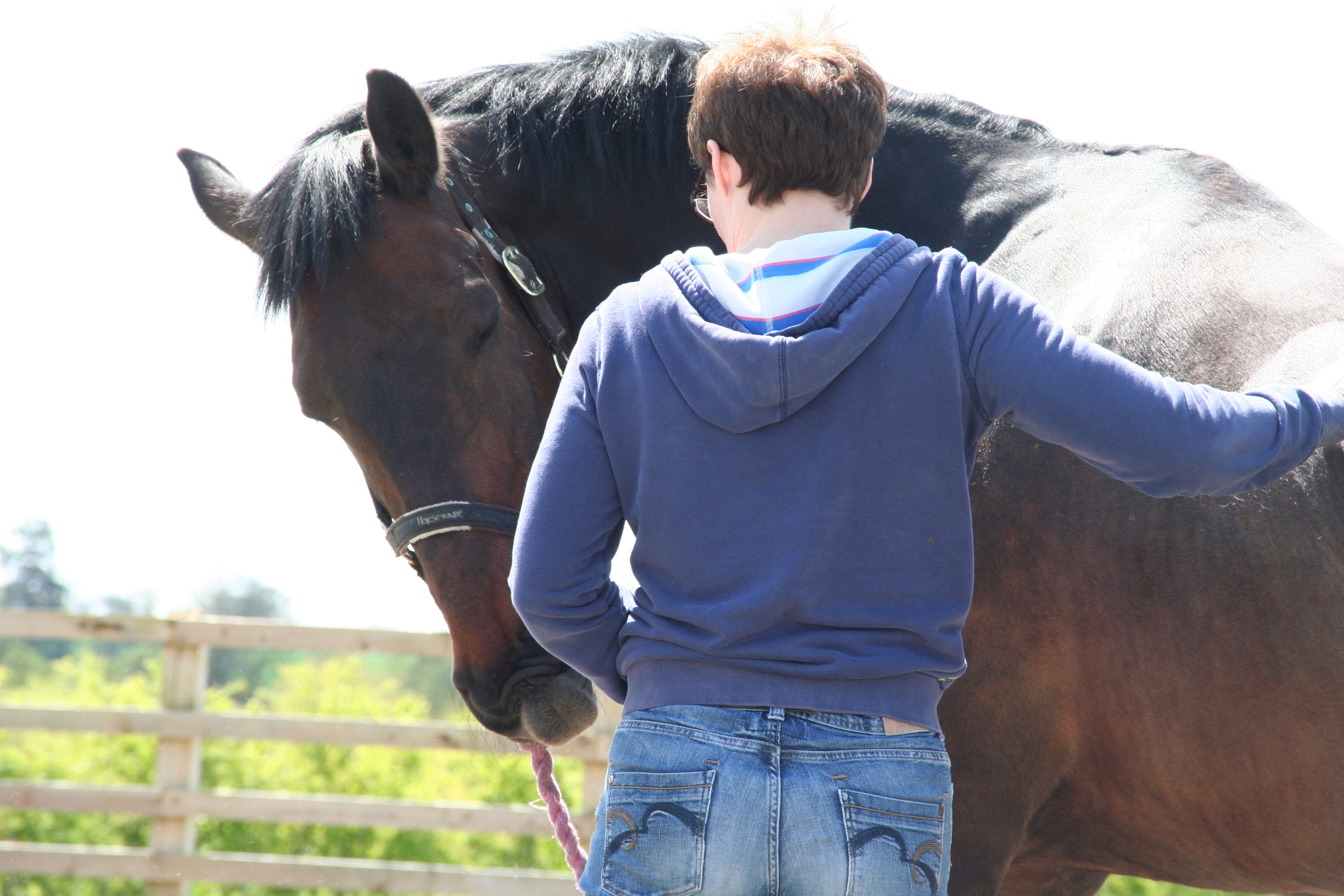 New Courses! Equine Practitioners Course