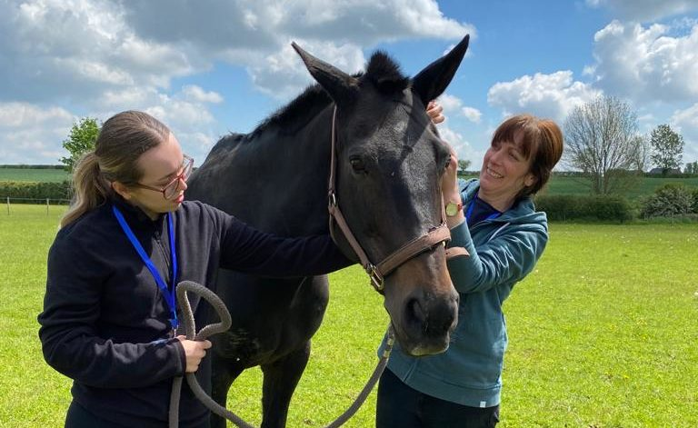 1 DAY EQUINE FACILITATED LEARNING WORKSHOP – NOVEMBER 2021 – Book your place now!